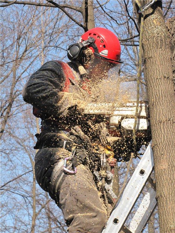Удаление и спил деревьев в Самаре и Тольятти