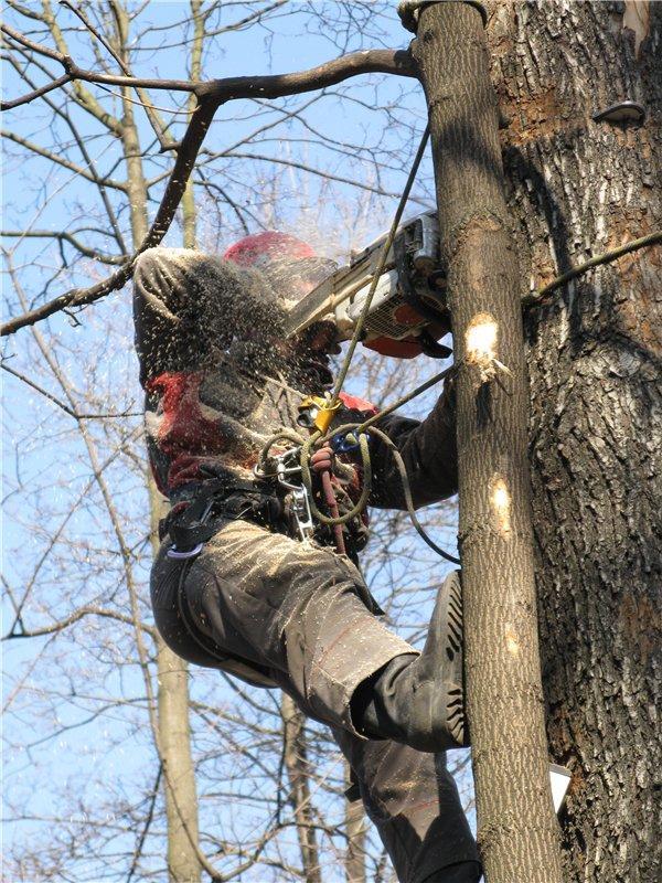 Удаление деревьев в Самаре и Тольятти